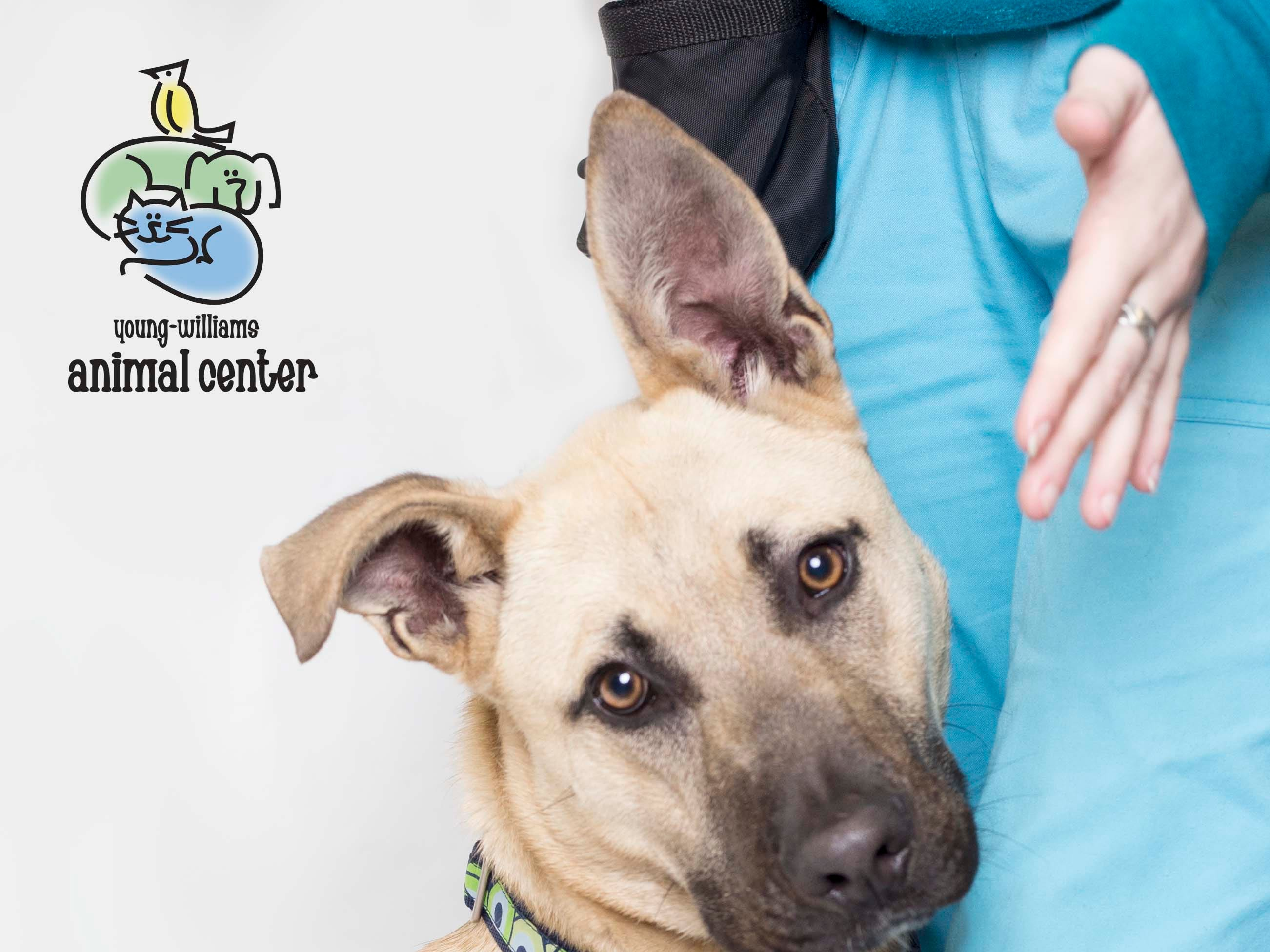 Benny is up for adoption at Young-Williams animal center on Thursday, March 21, 2019.