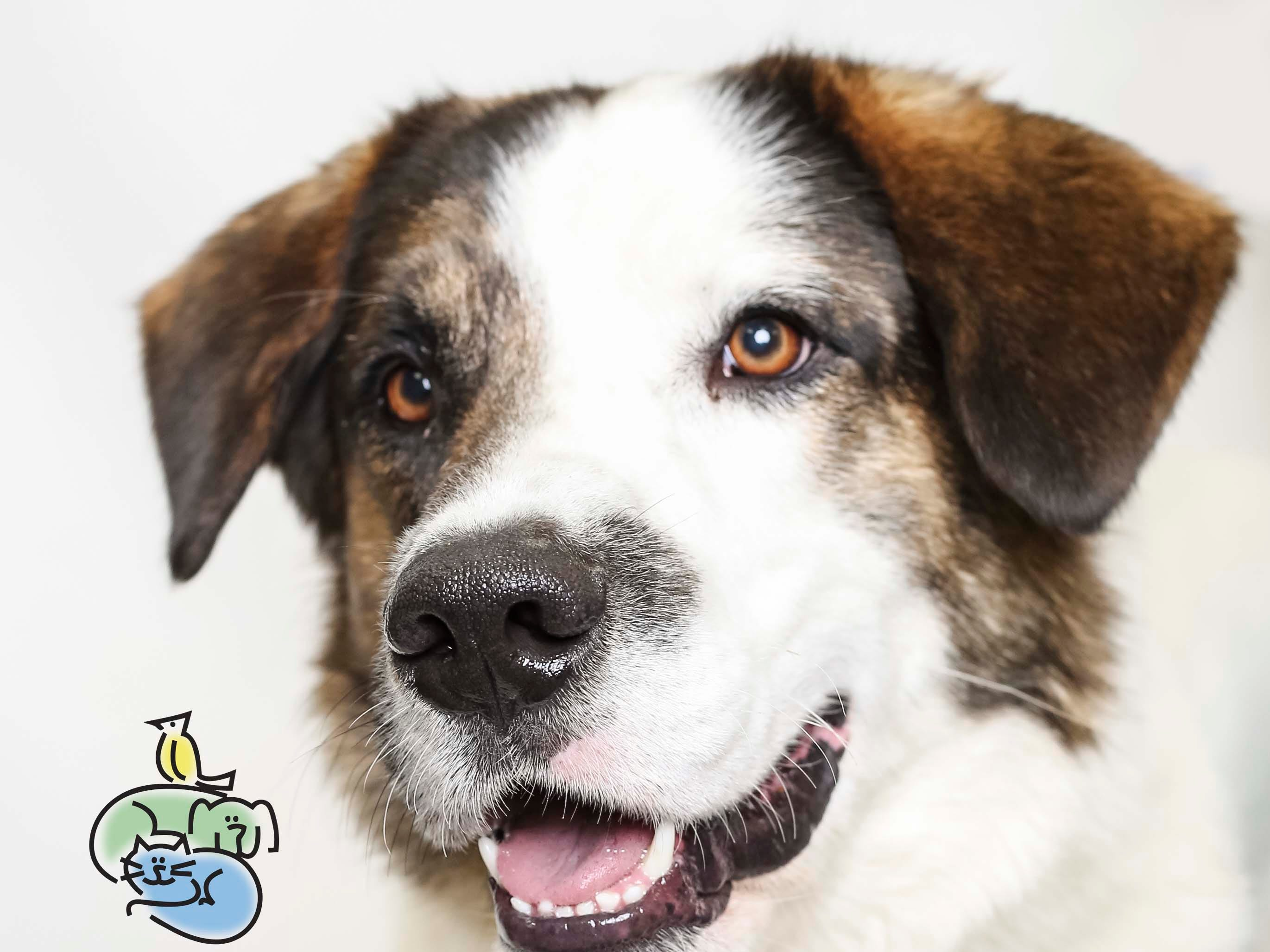 Phoenix is up for adoption at Young-Williams animal center on Thursday, March 21, 2019.