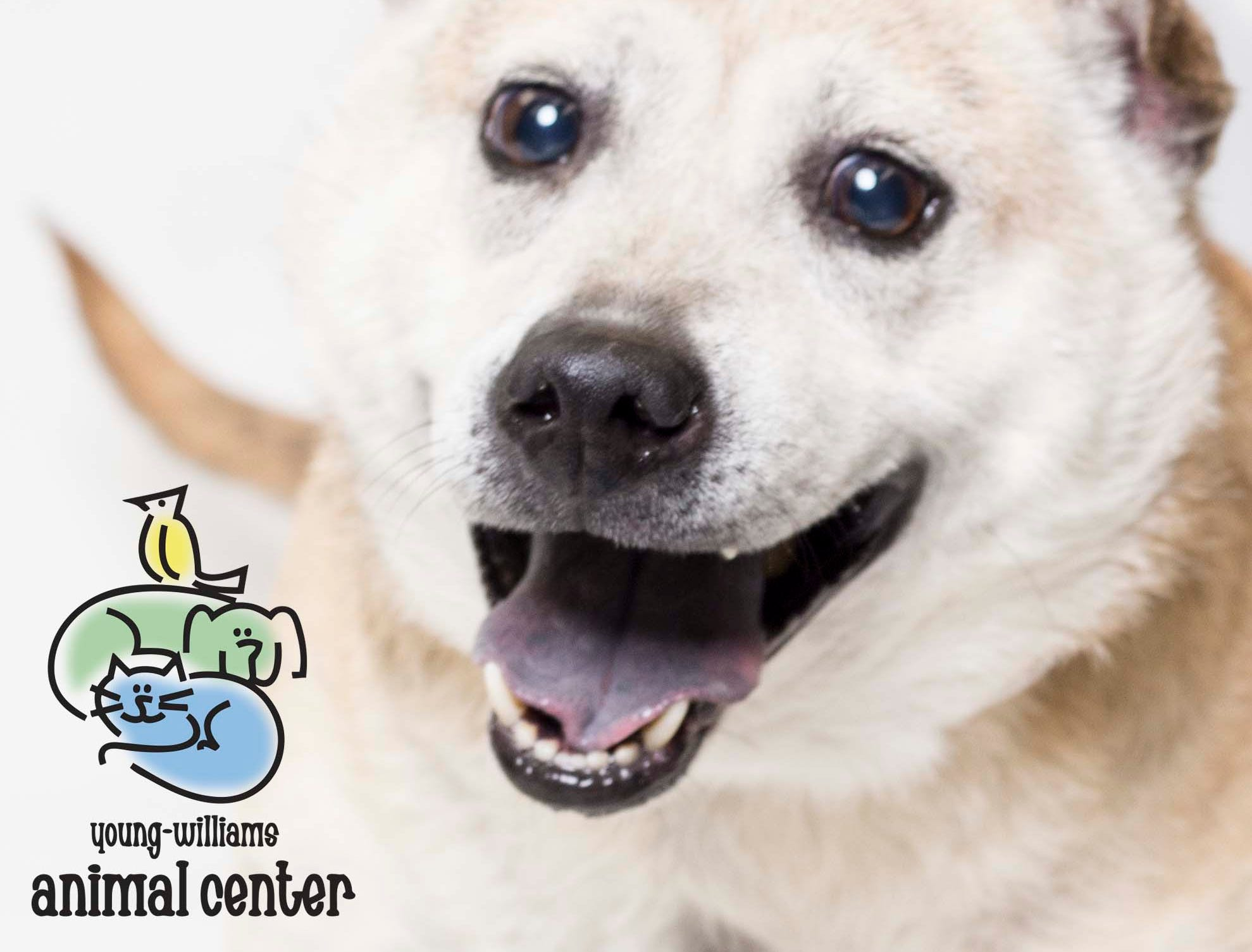 Sunshine is up for adoption at Young-Williams animal center on Thursday, March 21, 2019.