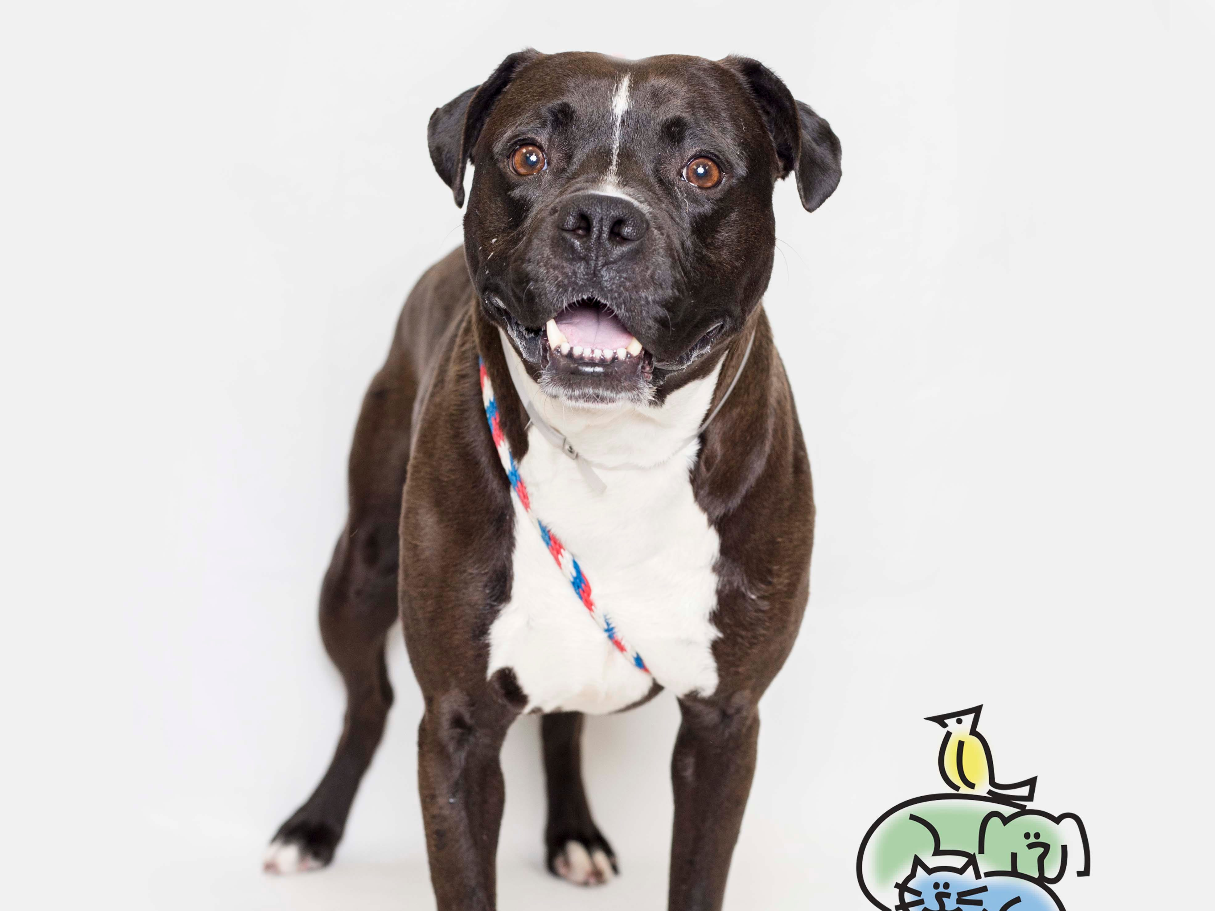 Doug is up for adoption at Young-Williams animal center on Thursday, March 21, 2019.