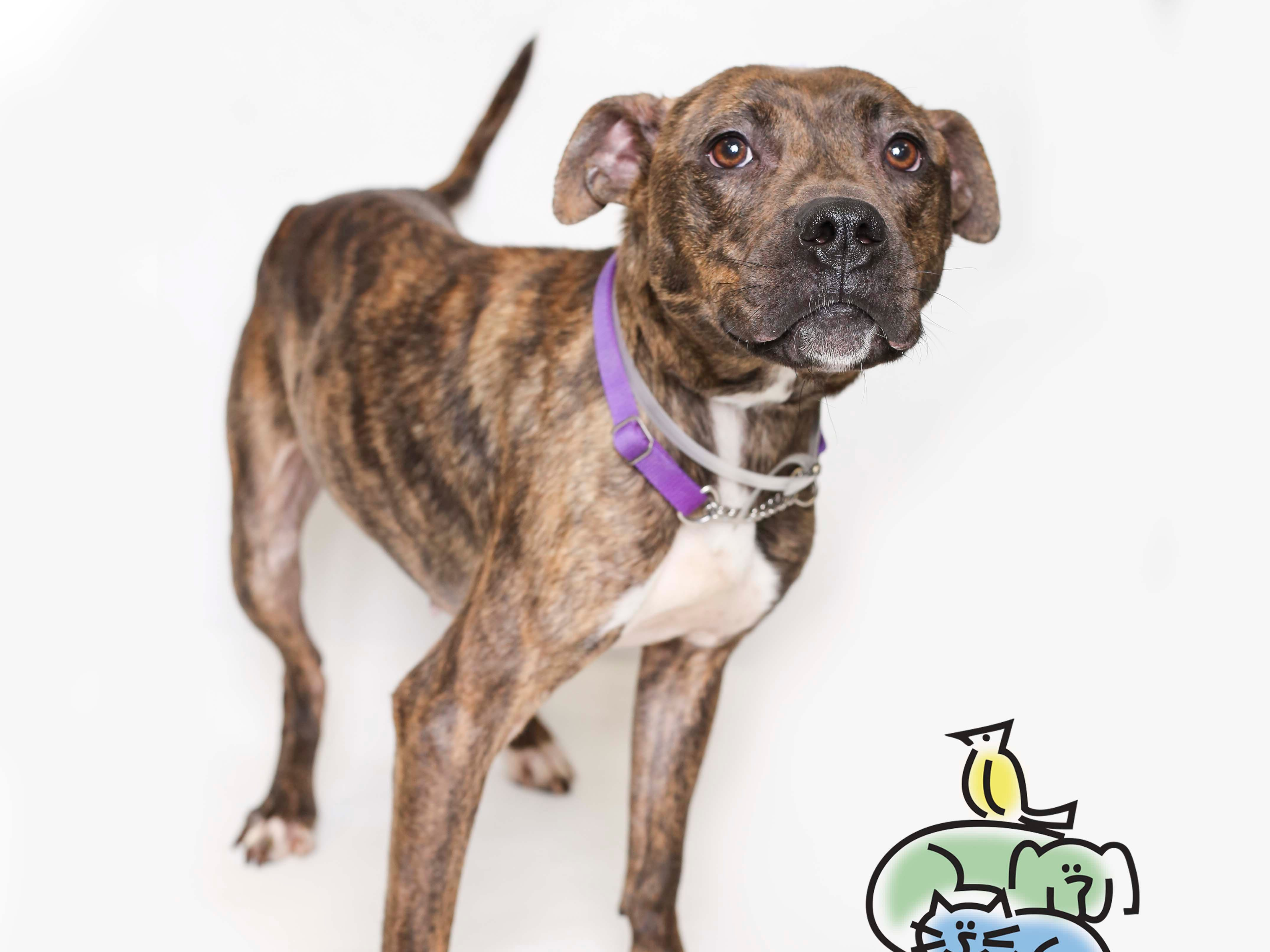 Petunia is up for adoption at Young-Williams animal center on Thursday, March 21, 2019.
