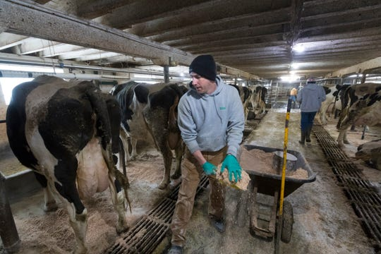 Tom Crosby spreads lime and sawdust in his milking barn.