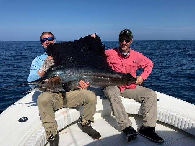 Sailfish caught offshore of Naples aboard the Scooter with Capt. Stephen Ianotta at the helm.