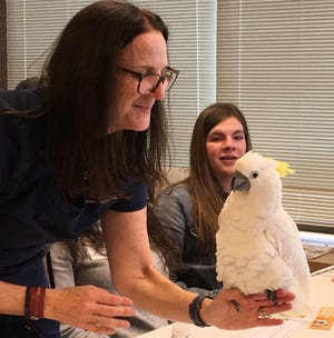 Eighth grader Lyndie Jasso from West Middle School in Taylor looks fascinated as Vet Tech Jane Y. Miller shows her the triton cockatoo in the exotic pet workshop at the American Association of University Women Explorathon workshop. Dr. Ann Callahan presented the workshop and described the career of an animal doctor. The students saw and touched many birds, mammals and reptiles.