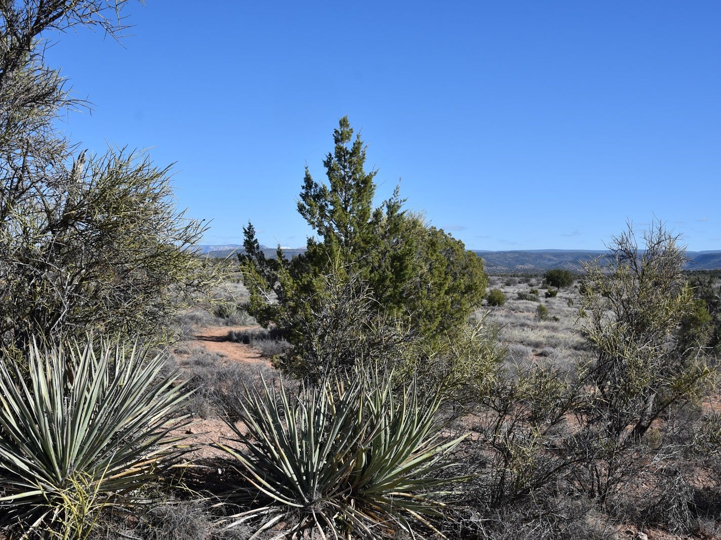 High-desert vegetation on the Cedar Knoll Trail.