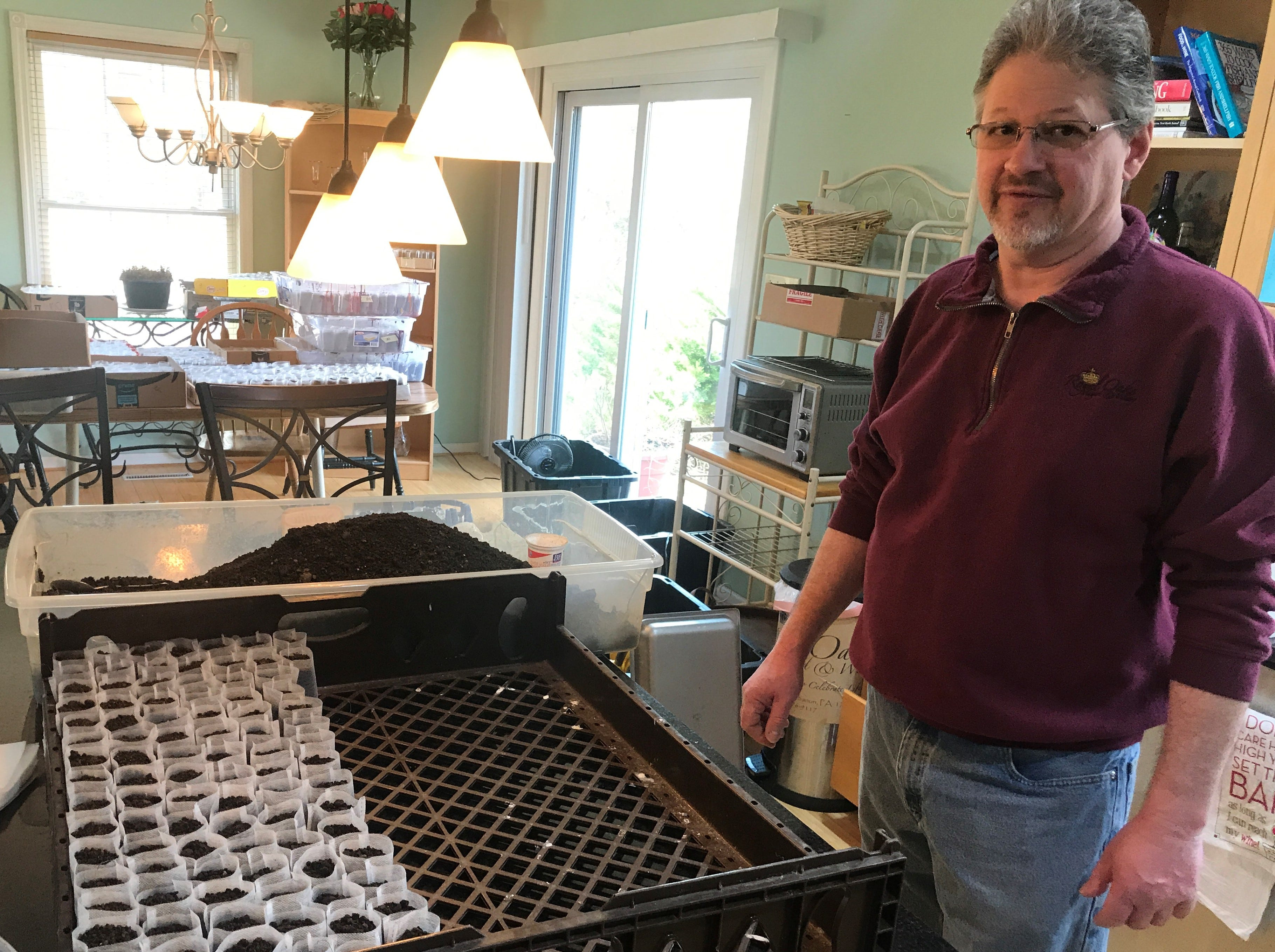 William Hartmann, owner of Royal Oaks vineyard and winery in North Cornwall Township, plans to grow these industrial hemp plants this year.