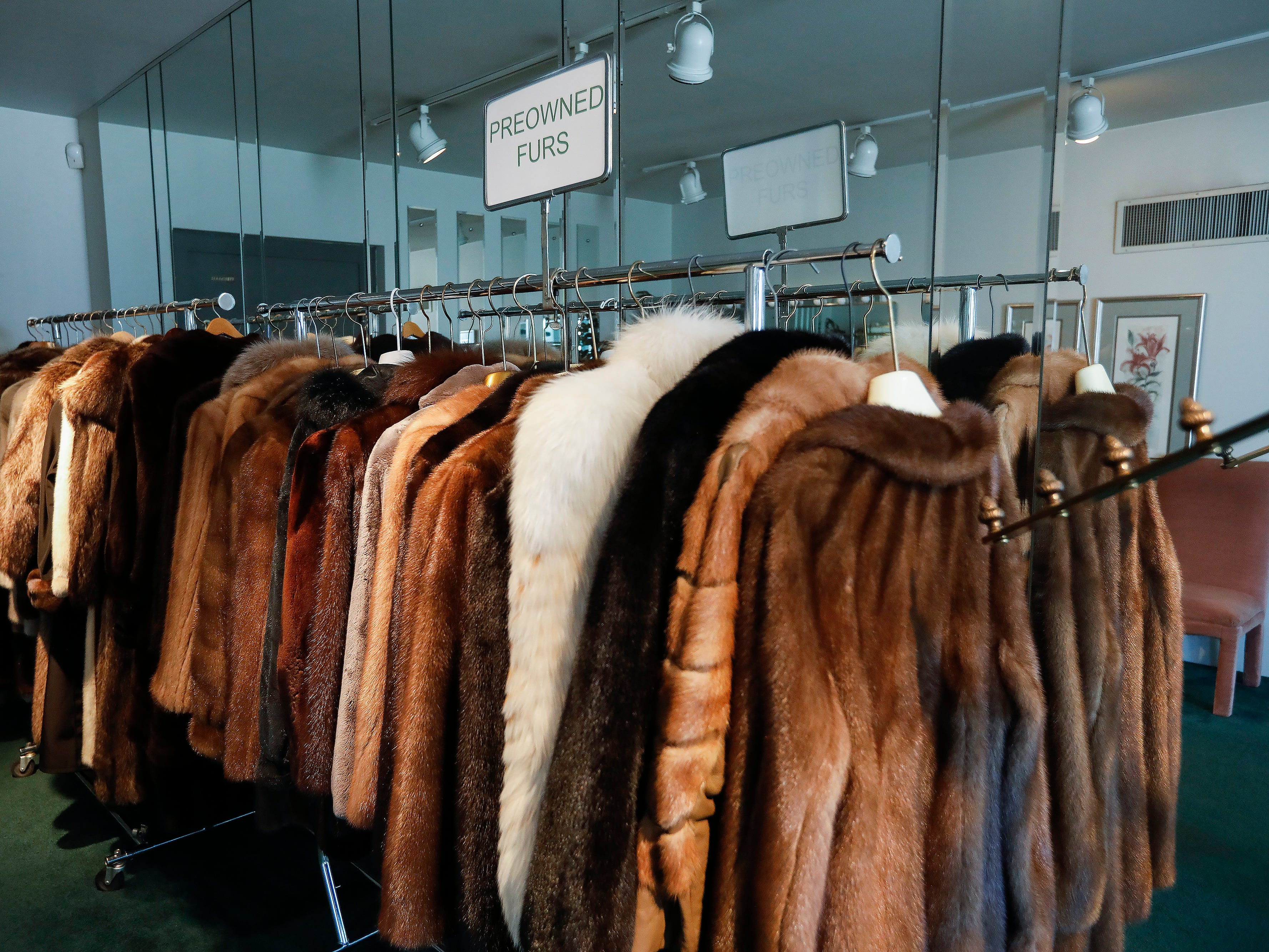 A look at some of the preowned furs for sale at McDaniel Furs, located at 901 S. Glenstone Ave.