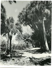 The intersection of Jungle Trail and Old Winter Beach Road prior to its development.