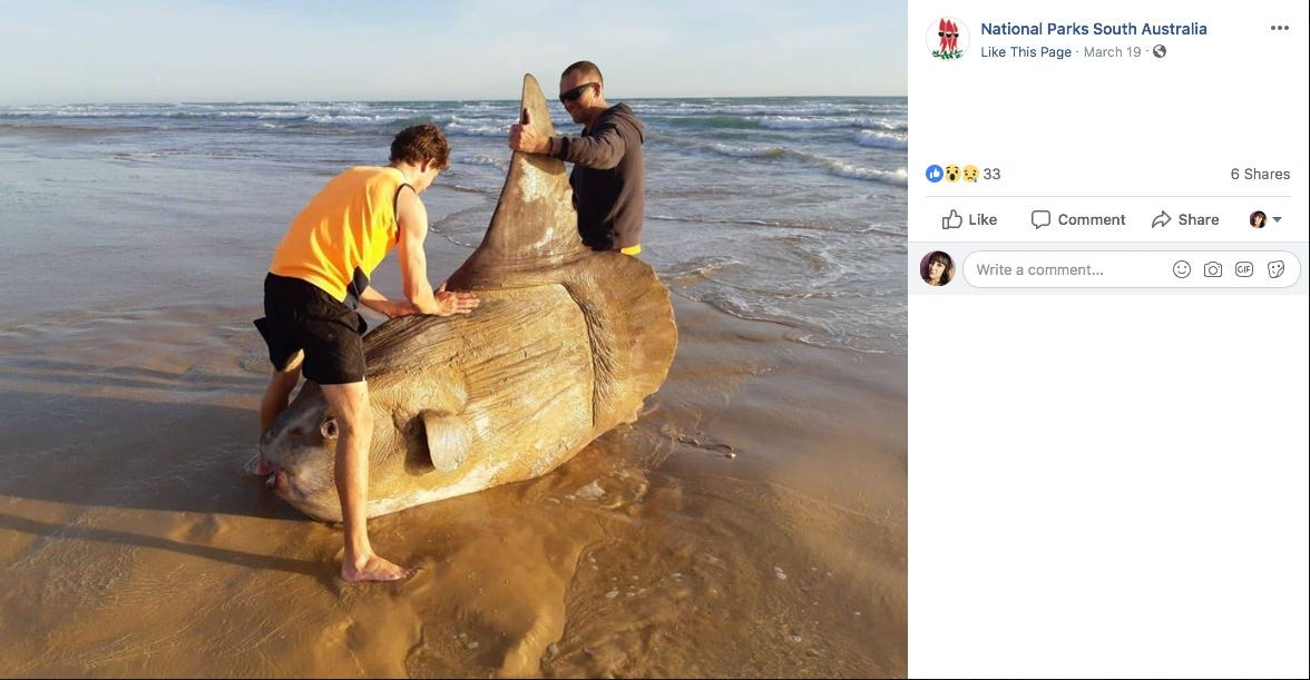 Huge, weird fish washes up on Australia beach and photos look unreal