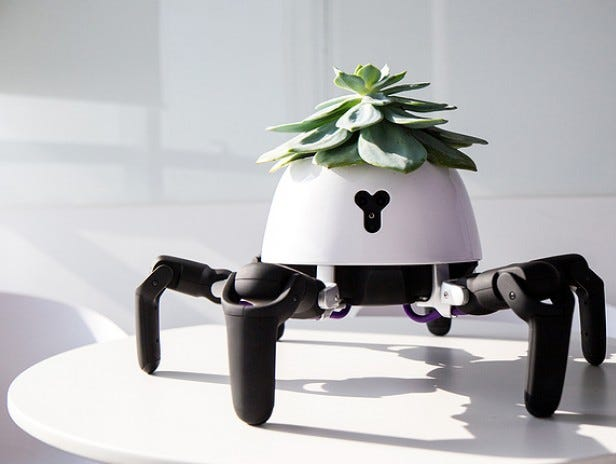 Meet HEXA, a six-legged, agile, highly adaptable robot. This sun-chasing robot looks after the plant on its head. It's a special addition installation created by Vincross founder Sun Tianqi.