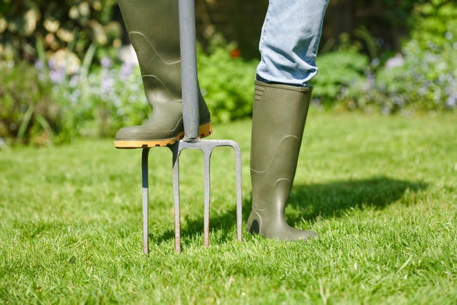 Any tool that creates slender, deep holes can help with lawn aeration, but a machine that removes soil plugs is the best option. (Dreamstime)