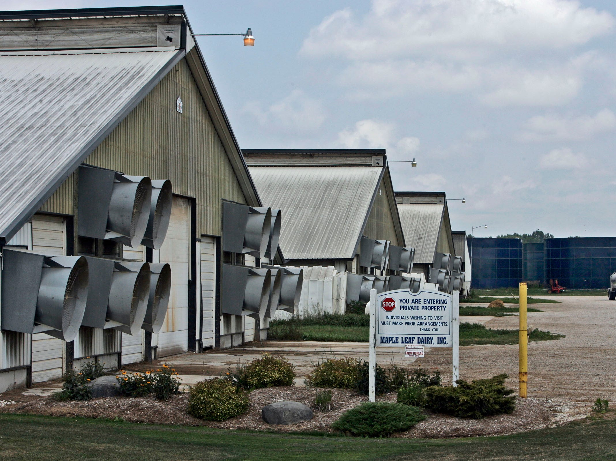 2007: CAFOs (concentrated animal feeding operations) had local residents  worried about the amount of waste they produce. Maple Leaf Diary is one of six factory farms in Manitowoc County. Manure is stored in the large blue tanks seen in the background.