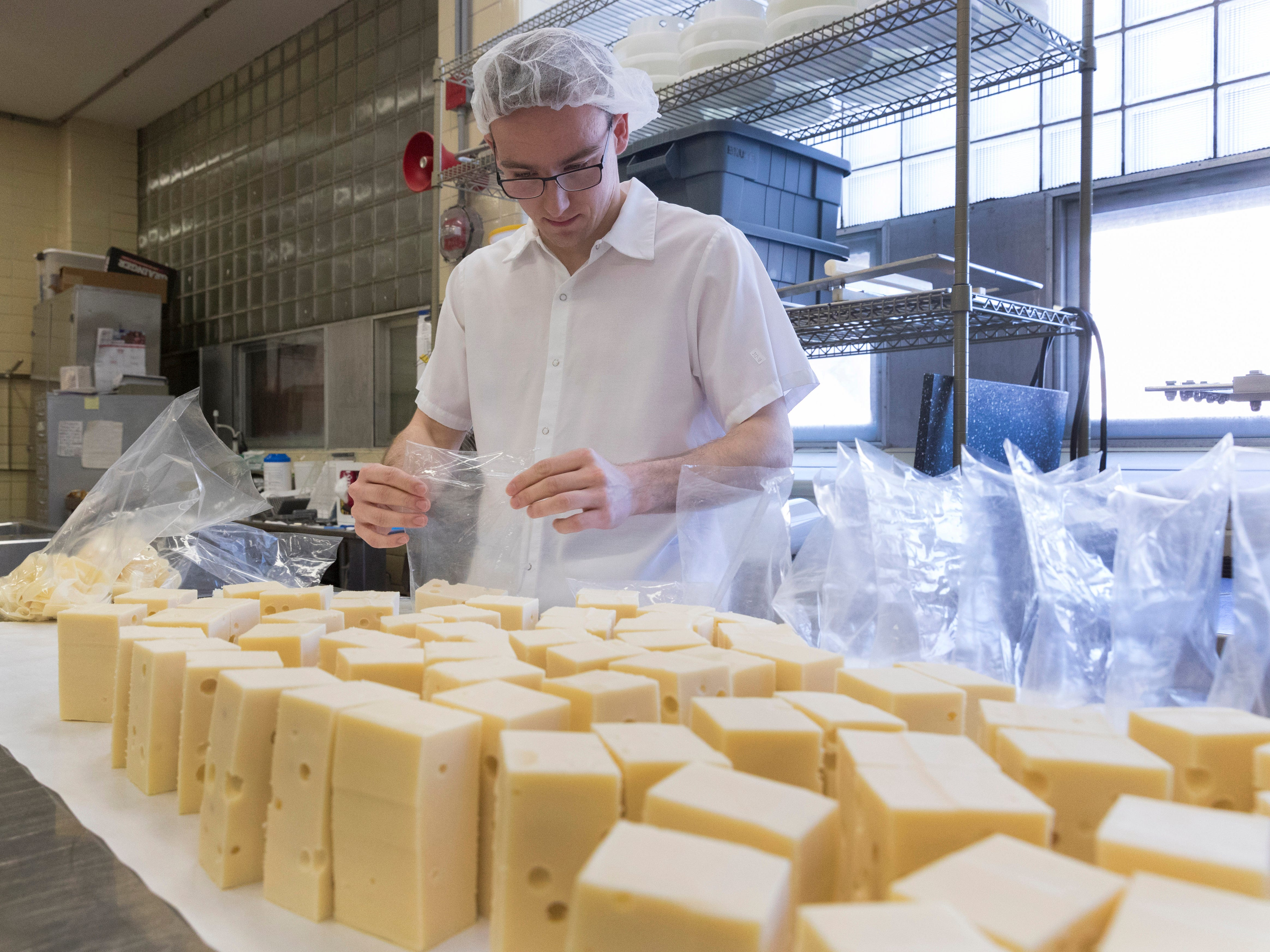 2019: Cheese is one of the strongest growth products produced from milk. Student worker and food engineering major Tyler Rateike bags half-pound blocks of baby Swiss cheese at Babcock Hall at UW-Madison. The building's namesake, Stephen M. Babcock, transformed the dairy industry with his invention of the first reliable butterfat-content milk test, providing an easy way to check and control milk quality. He also partnered with bacteriologist Harry Luman Russell to develop the cold-curing process for ripening cheese, a move which enabled Wisconsin to become the nation's leading cheese producer for years.