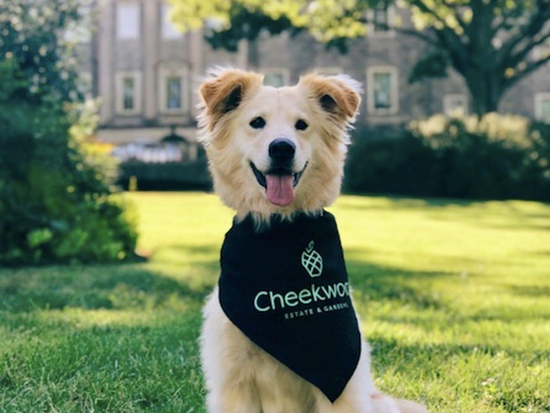 April 13 DOGS AND DOGWOODS: Through April 14, Cheekwood, $15-$22, cheekwood.org