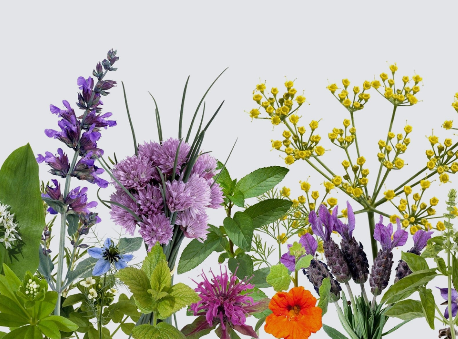 April 13 HERB AND PLANT SALE: 9 a.m.-2 p.m. Tennessee State Fairgrounds Sports Arena. $5 parking, herbsocietynashville.org