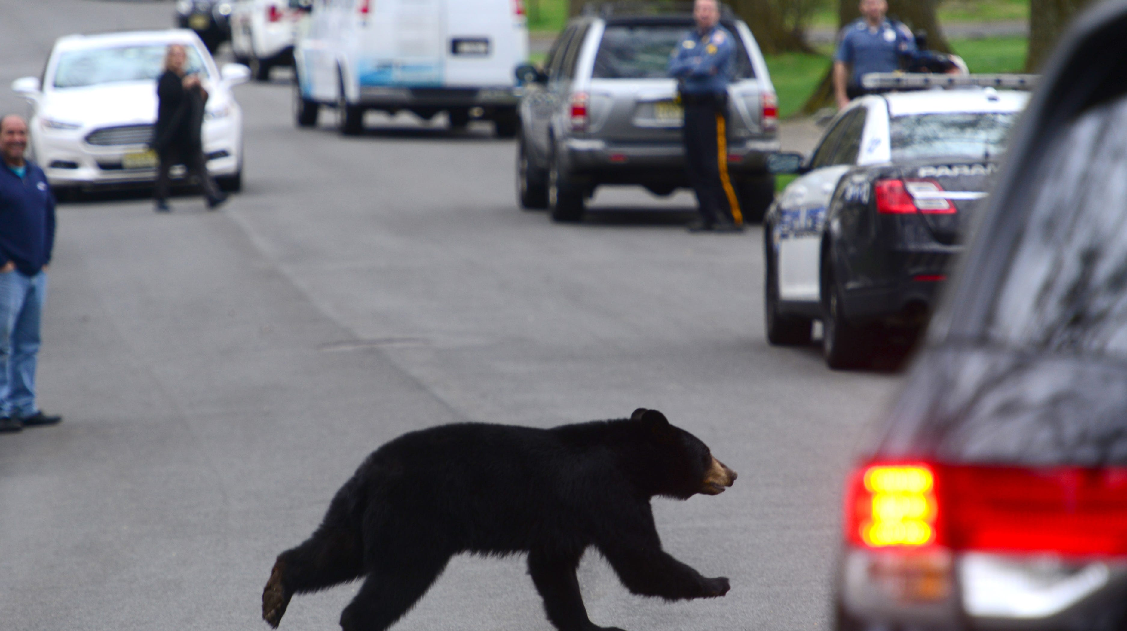 NJ DEP doesn't want you to know where the bears are