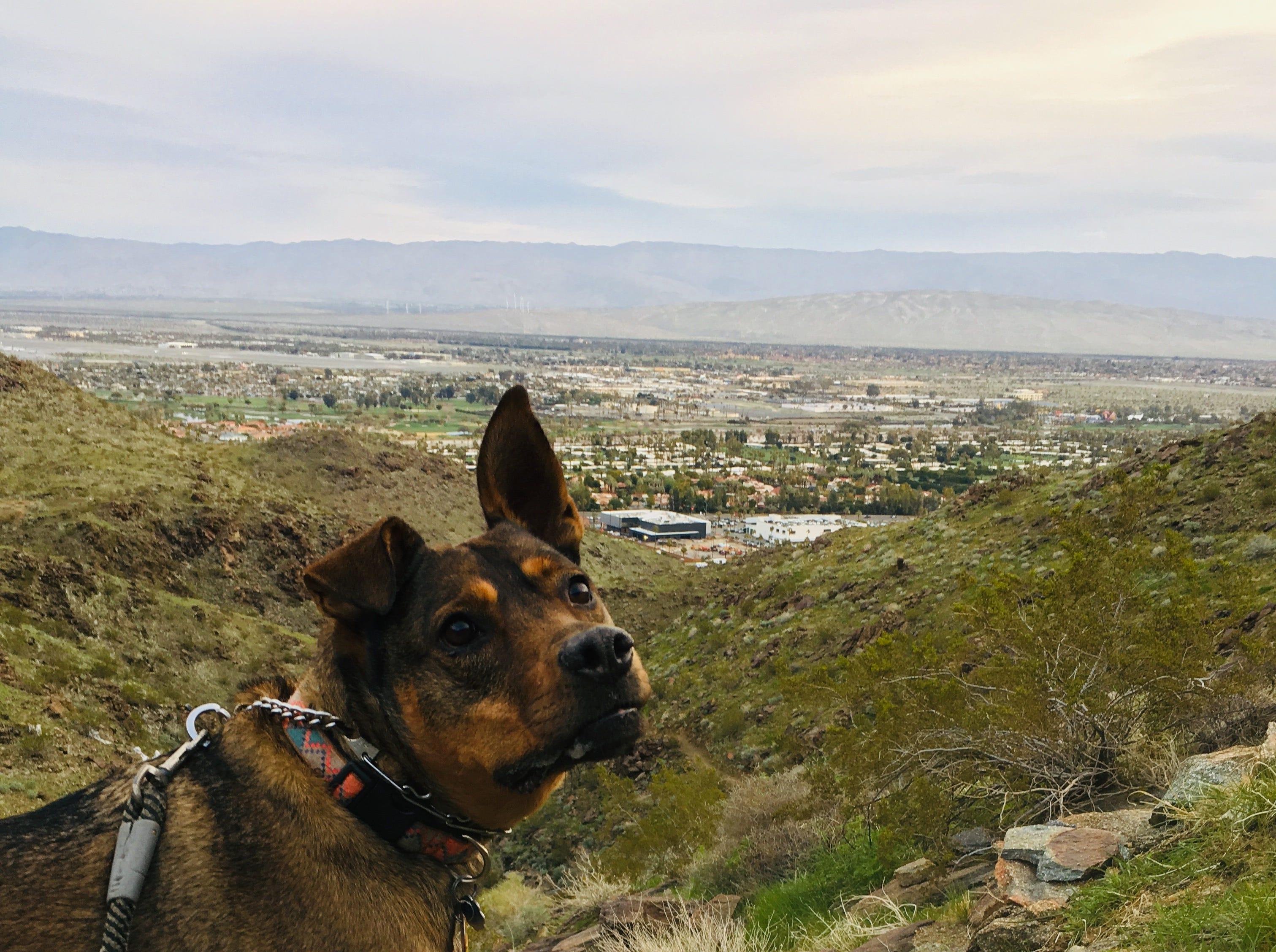 Immigration reporter Rebecca Plevin's dog Nacho.