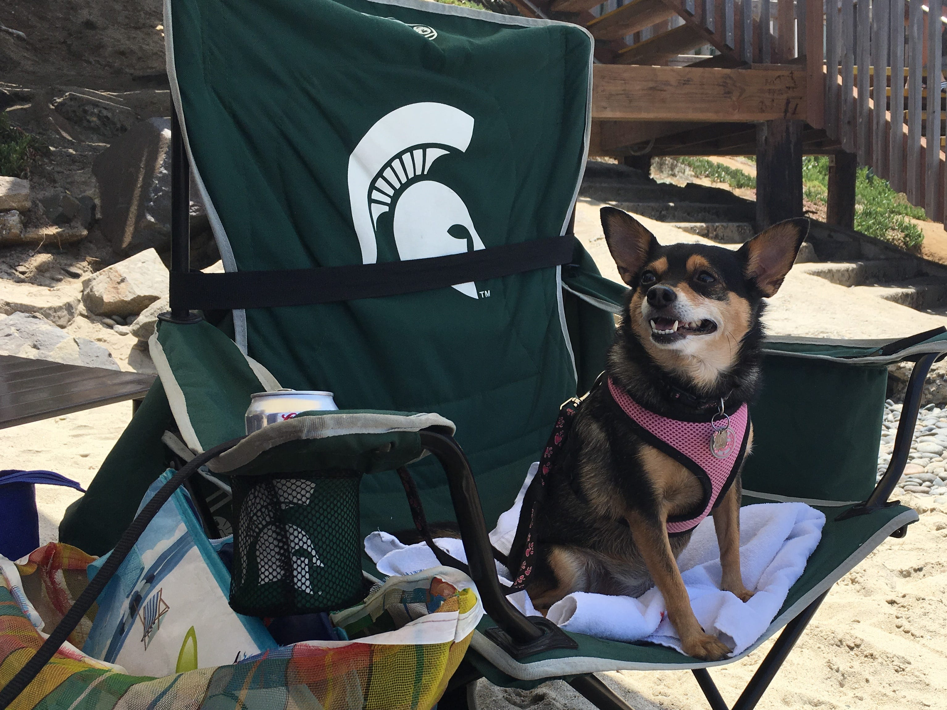 Sports columnist Shad Powers' dog Lucy