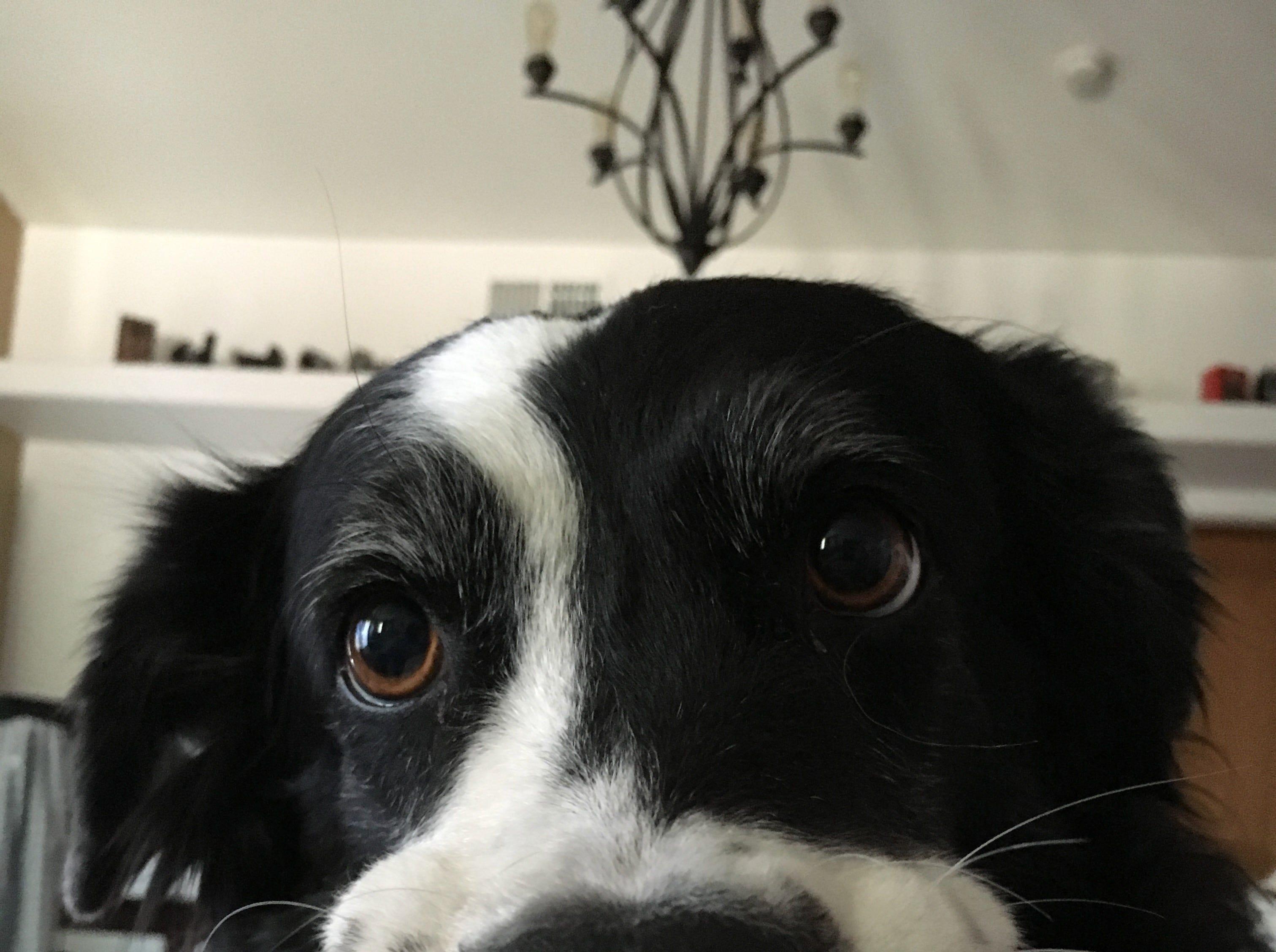 "Photographer Jay Calderon's dog named ""Puppy."""