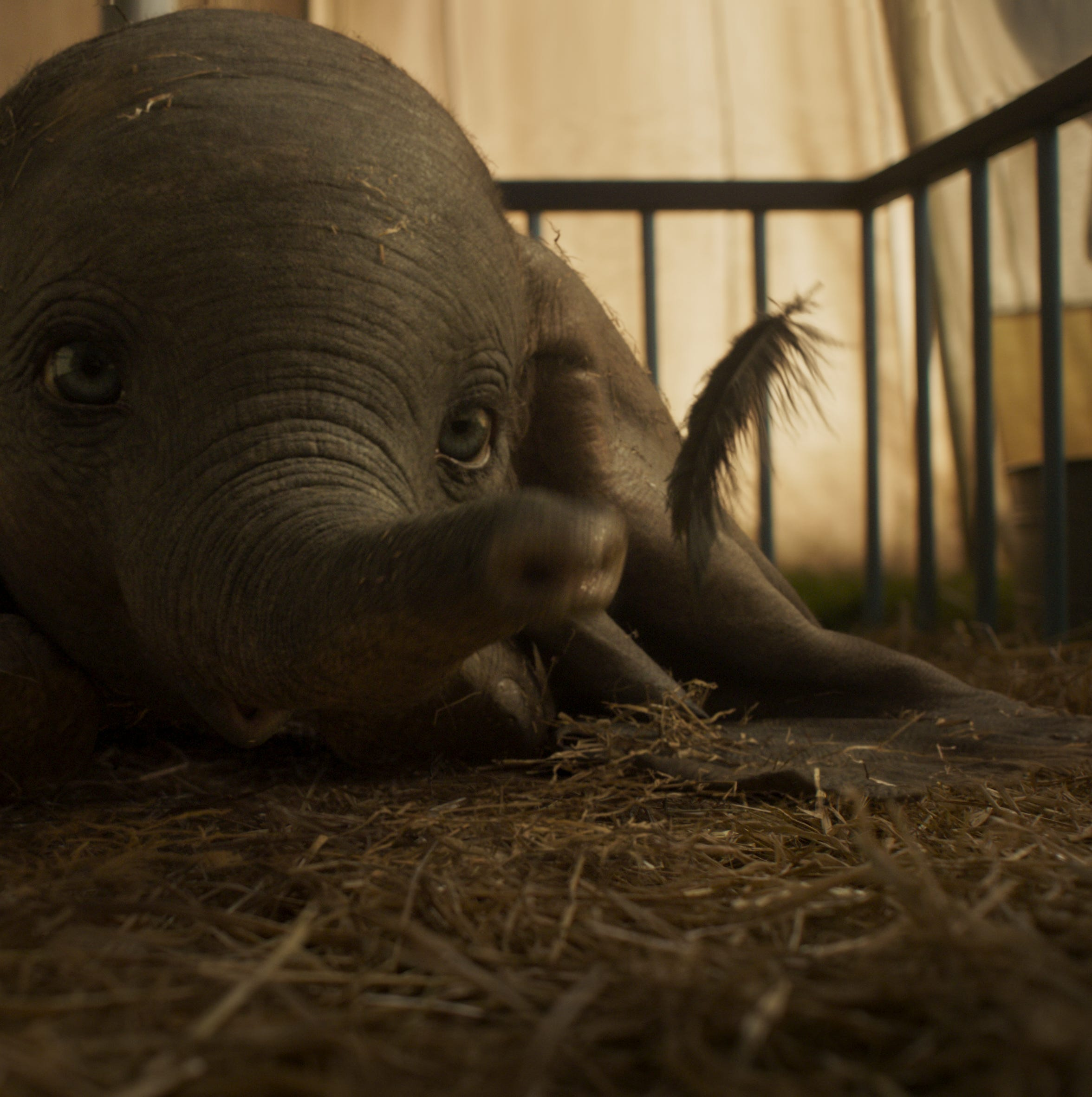 Elephants can't fly — and 15 more fun facts in honor of 'Dumbo'