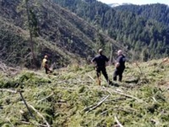 A logger in Polk County was rescued Monday after plummeting down a steep ravine and being hit by a boulder.