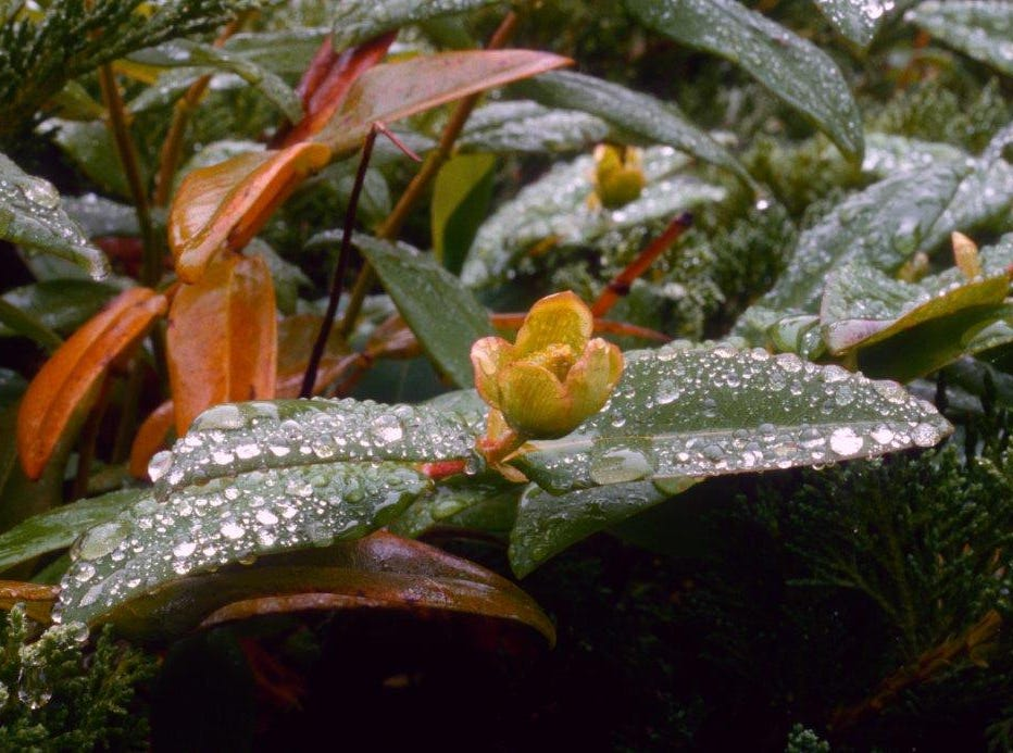 """""""After the Rain"""""""