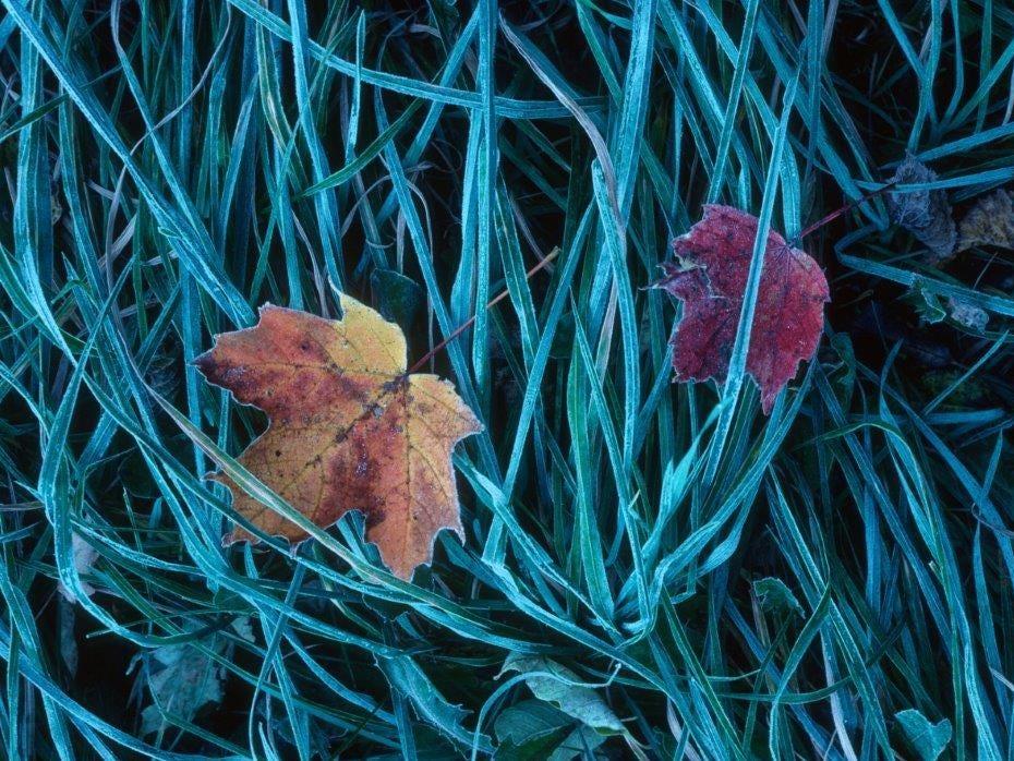 """""""Frosty Grass Portrait"""""""