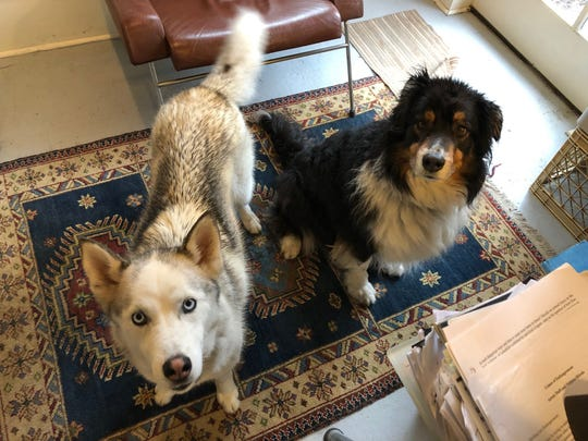The author's dogs, Bella and Amir, in their home in Montclair, New Jersey, in March 2018.