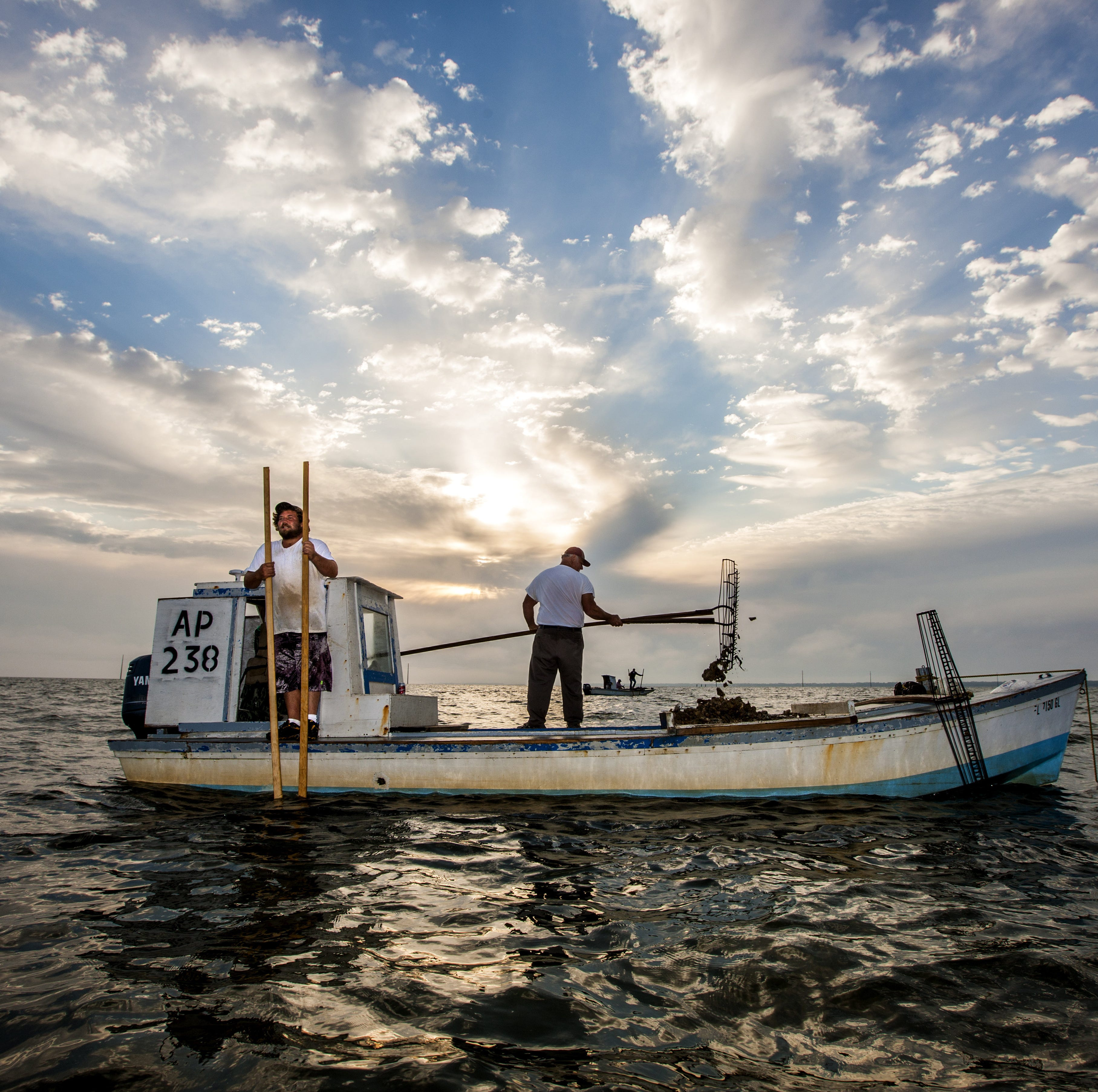 FSU receives grant to restore Apalachicola Bay's struggling oyster industry