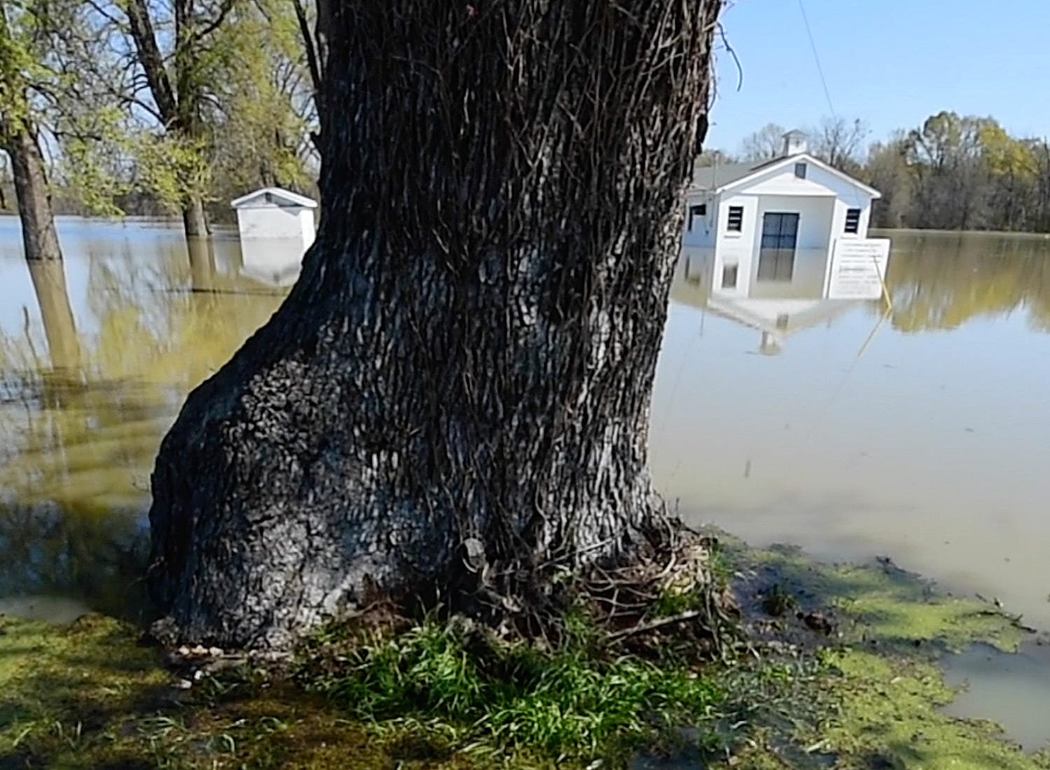 Evergreen M.B. Church on Floweree Road in Redwood has been breeched by floodwaters. Its cemetery, surrounding three of its four sides, is submerged with barely any tombstones visible.
