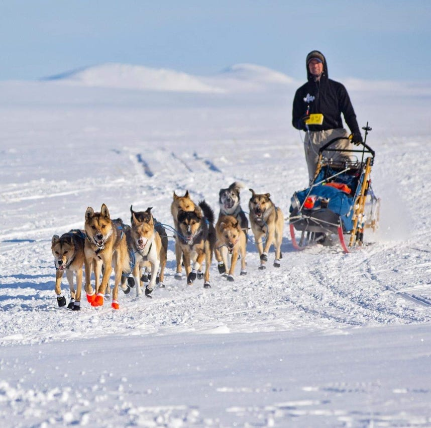 Mansfield native Matthew Failor places 18th in Iditarod, Alaska's famed sled dog race