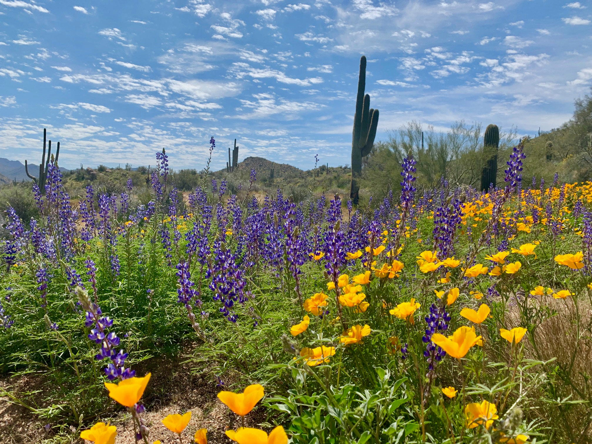 Brace yourself: After a cool spring, 90-degree weather is possible in Phoenix area