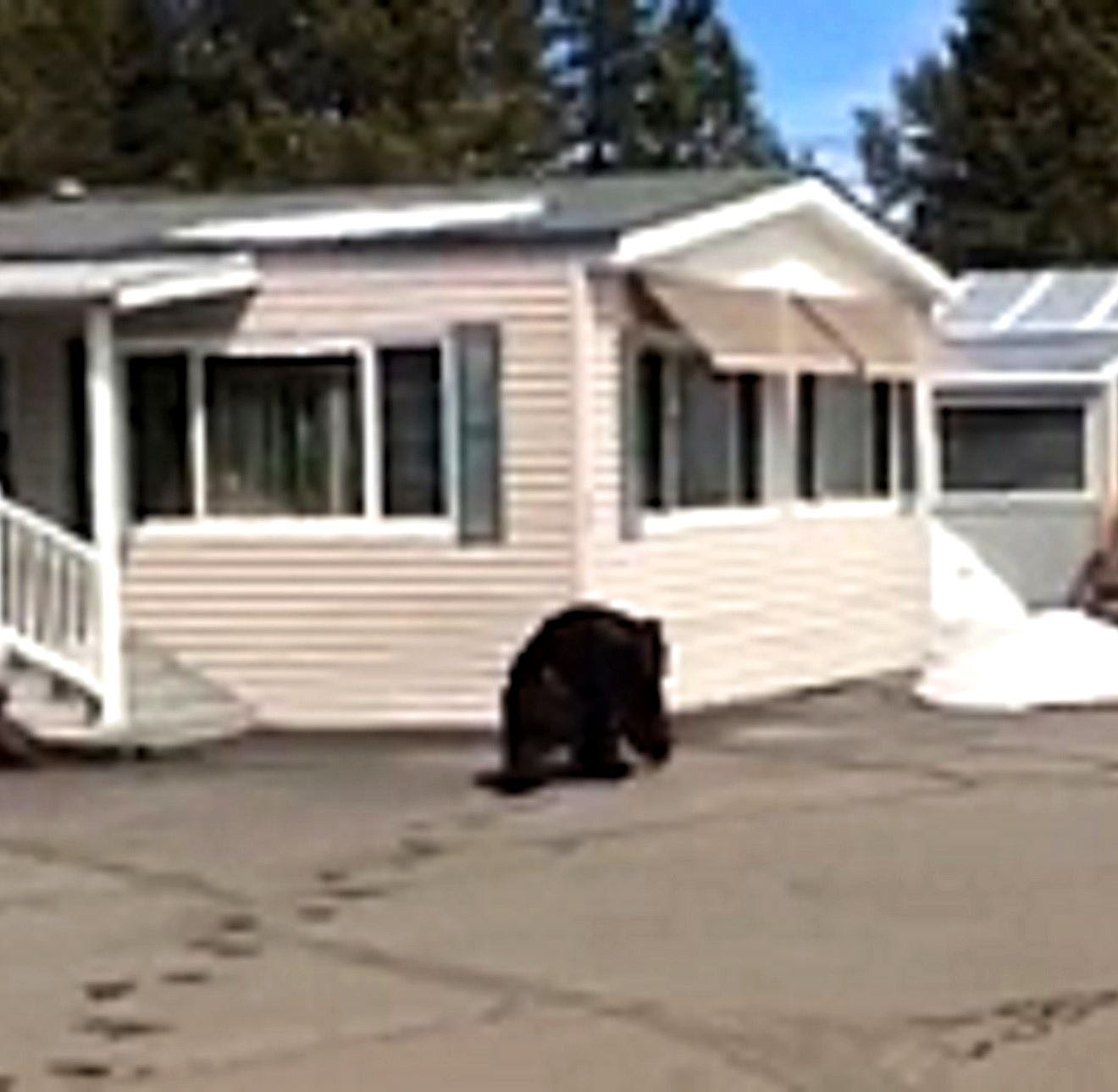 Truckee man describes his encounter with the notorious black bear named 'Big Boy'