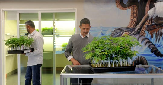 Zahur Lalji, left, and Sergio Burga move marijuana plants into storage at Wheelhouse Cannabis Dispensary, which they own. After Port Hueneme approved marijuana sales, they bought the buildings at 501 and 521 W. Channel Islands Blvd.