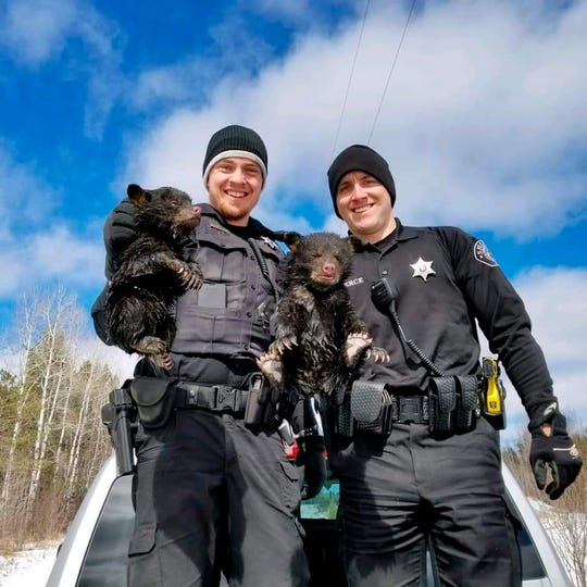 In this Friday, March 22, 2019 photo provided by the Ashland County Sheriff's Office, Ashland County sheriff's deputies Dylan Wegner, left, and Zach Pierce hold up two bear cubs they rescued from a flooded culvert on near the Bad River Indian Reservation near Ashland, Wis. The deputies said they decided to risk angering the mother because the cubs were soaked and cold and crying out. They put the baby bears in their squad car to warm and they were eventually placed in an open area for their mother to gather up.
