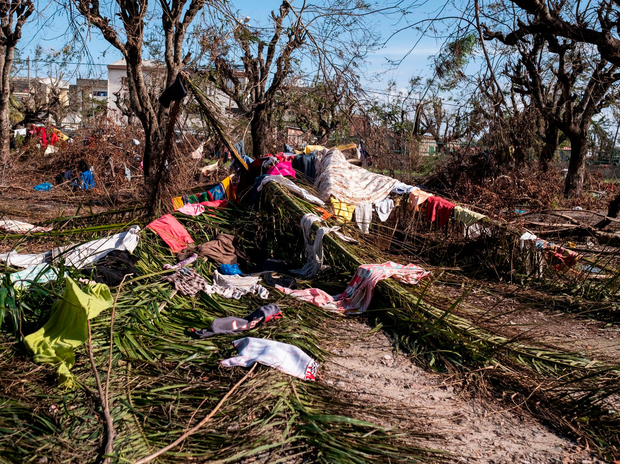 Laundry, placed by people on the fallen palm tree, dry at the Samora Machel High School in Beira, Mozambique, on March 23, 2019. The Samora Machelle High School is one of the places used as a living space for people from Buzi, Mozambique that has been displaced by the floods caused by Cyclone Idai. Cyclone Idai has affected many people living in the Beira and surrounding areas of Mozambique. Thousands of people have been displaced.