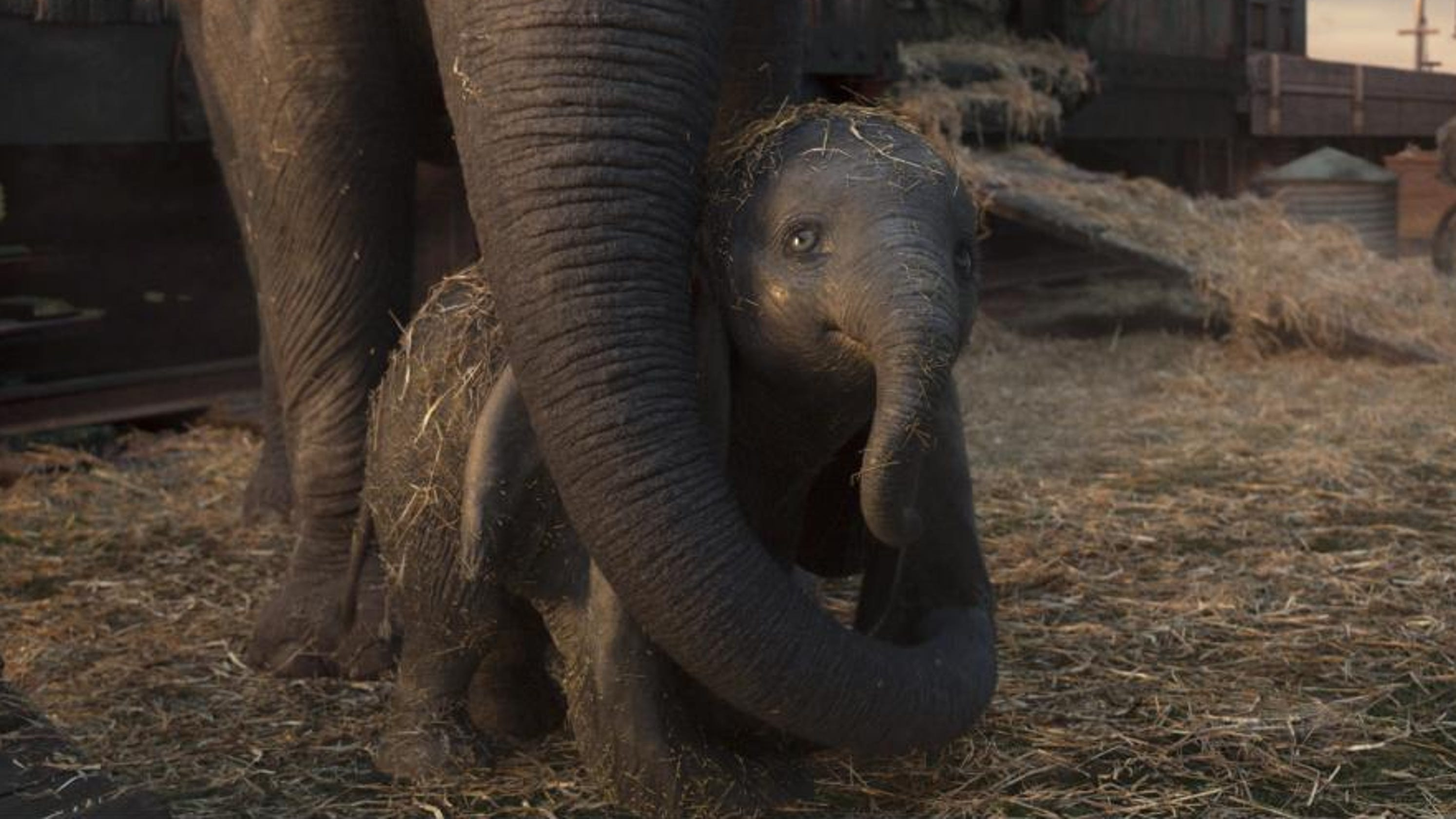 Dumbo' charms moviegoers, but flies feebly at box office