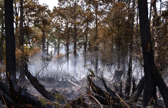 State firefighters and environmental authorities are overseeing a massive 2,600 prescribed burn in the Sebastian River Preserve. FILE.