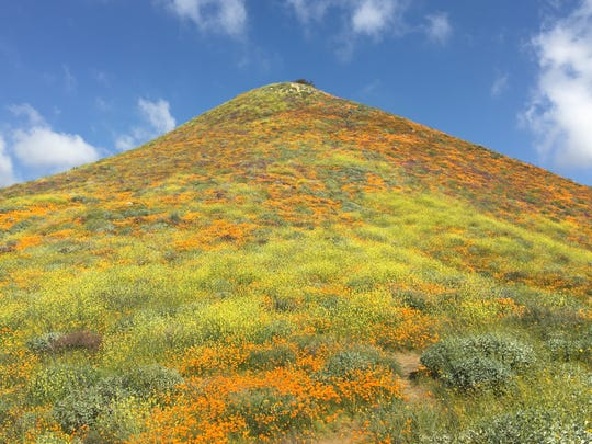 This photo shows the poppies and other flowers that are attracting visitors to Walker Canyon in Lake Elsinore.
