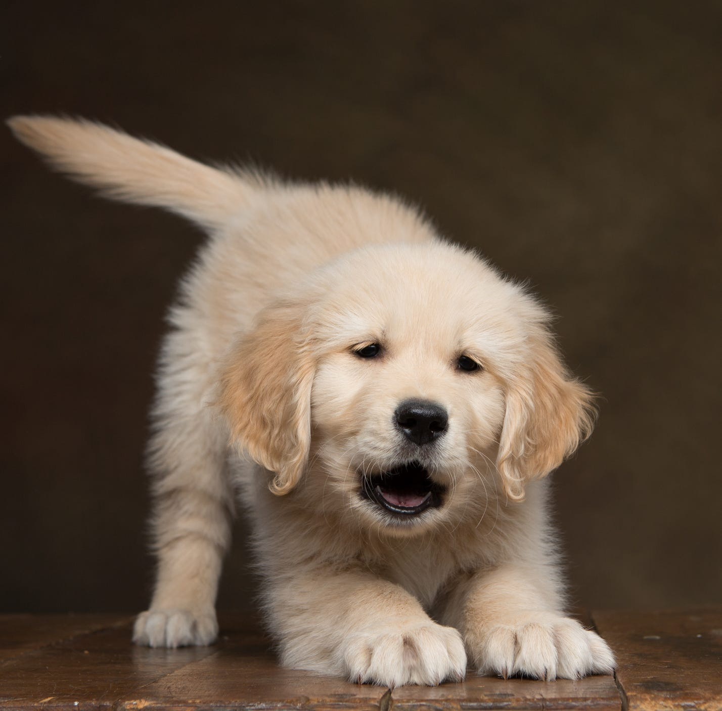 A 4-month-old puppy named Maverick is the eyes for an 11-year-old Golden Retriever named Charlie in North Carolina.