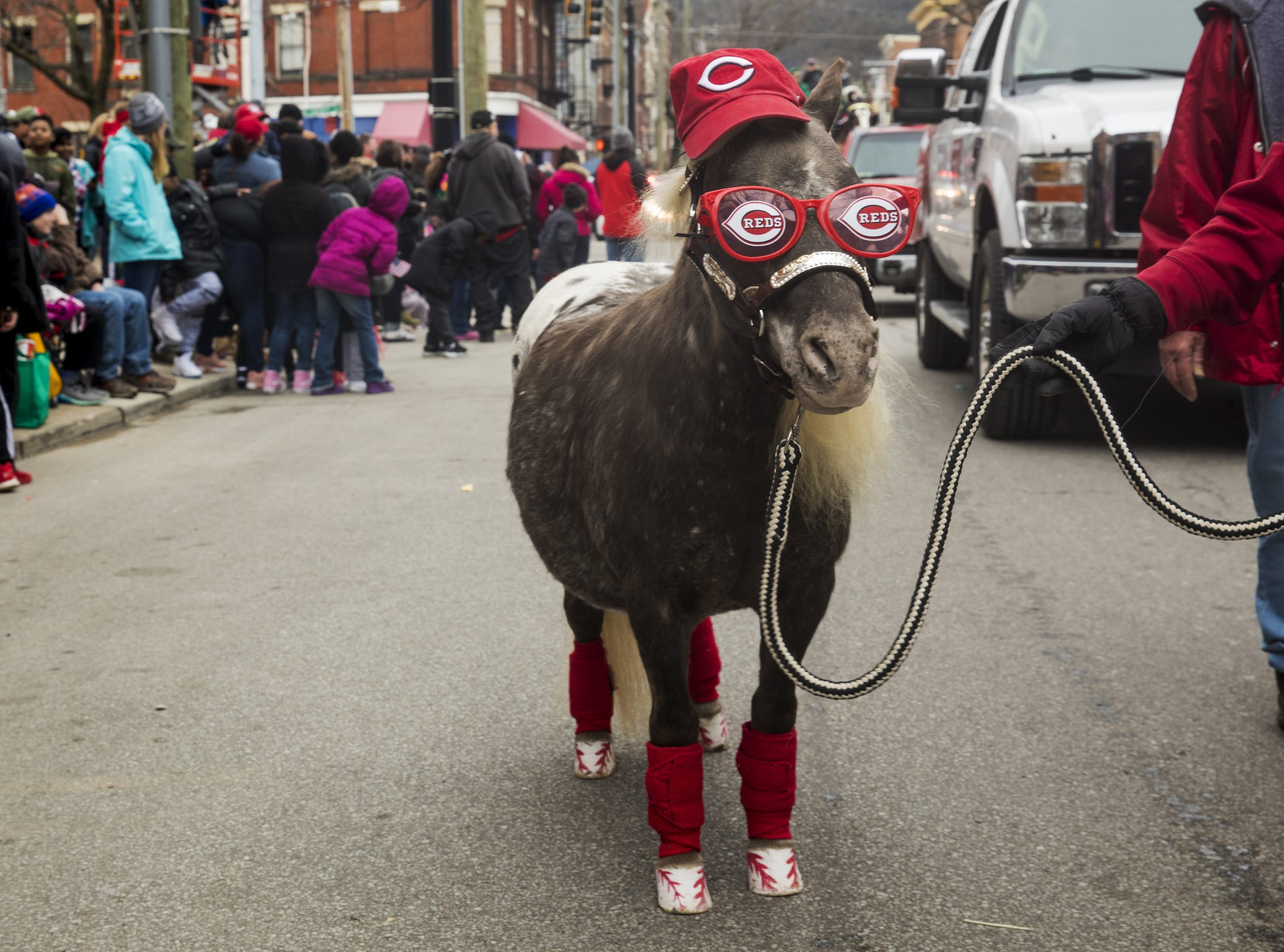 April 1, 2018: Ohio Horseman's Council Hamilton County Chapter brought their dressed-up miniature horses to the Findlay Market Opening Day Parade in downtown Cincinnati.