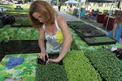 Anita Escalon picks out some tiny vegetables at her Microgreen stand at the GreenMarket Saturday at the Alliance for the Arts in Fort Myers.