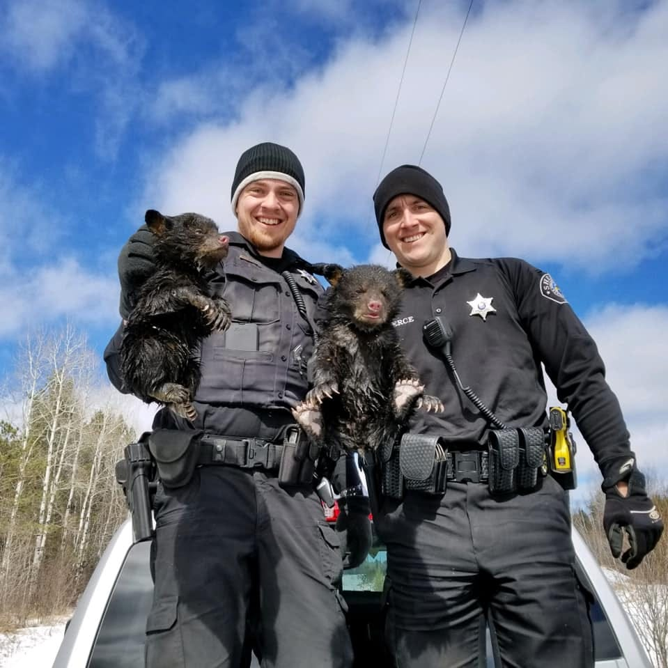 Ashland County deputies rescue two bear cubs stuck in a flooded den in northern Wisconsin