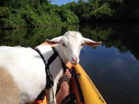 "The Billy & Teddy's Excellent Adventures Facebook page lets followers keep up with kayak trips, craft brewery outings and other shenanigans with Jerome Hooge's ""kids,"" Billy, Teddy, Annie and Leia."