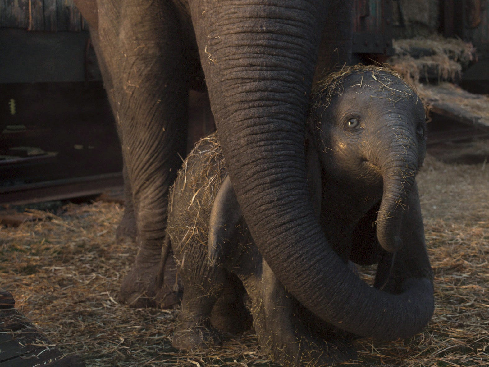 "In ""Dumbo,"" a circus owner purchases an expectant mother elephant in hopes that her adorable offspring will bring in the crowds."