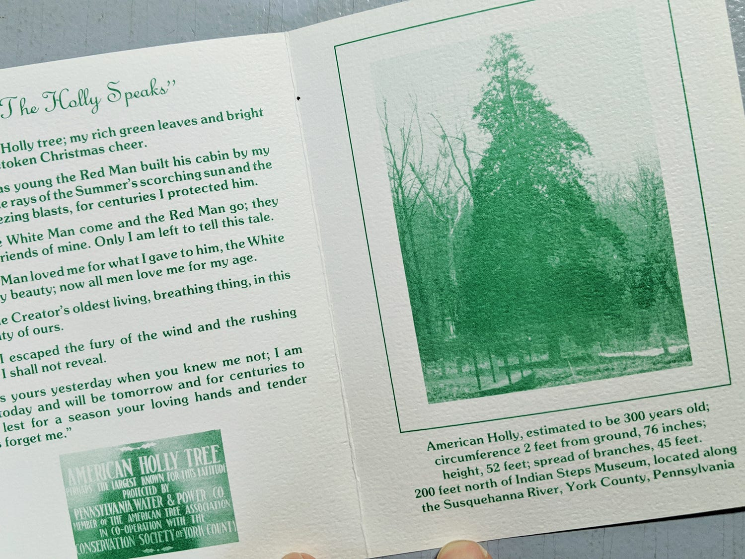 A museum brochure from about 50 years ago tells the story of the the American holly tree. The tree, believed to be 350 years old, is part of the Indian Steps Museum along the Susquehanna River in Lower Chanceford Township.