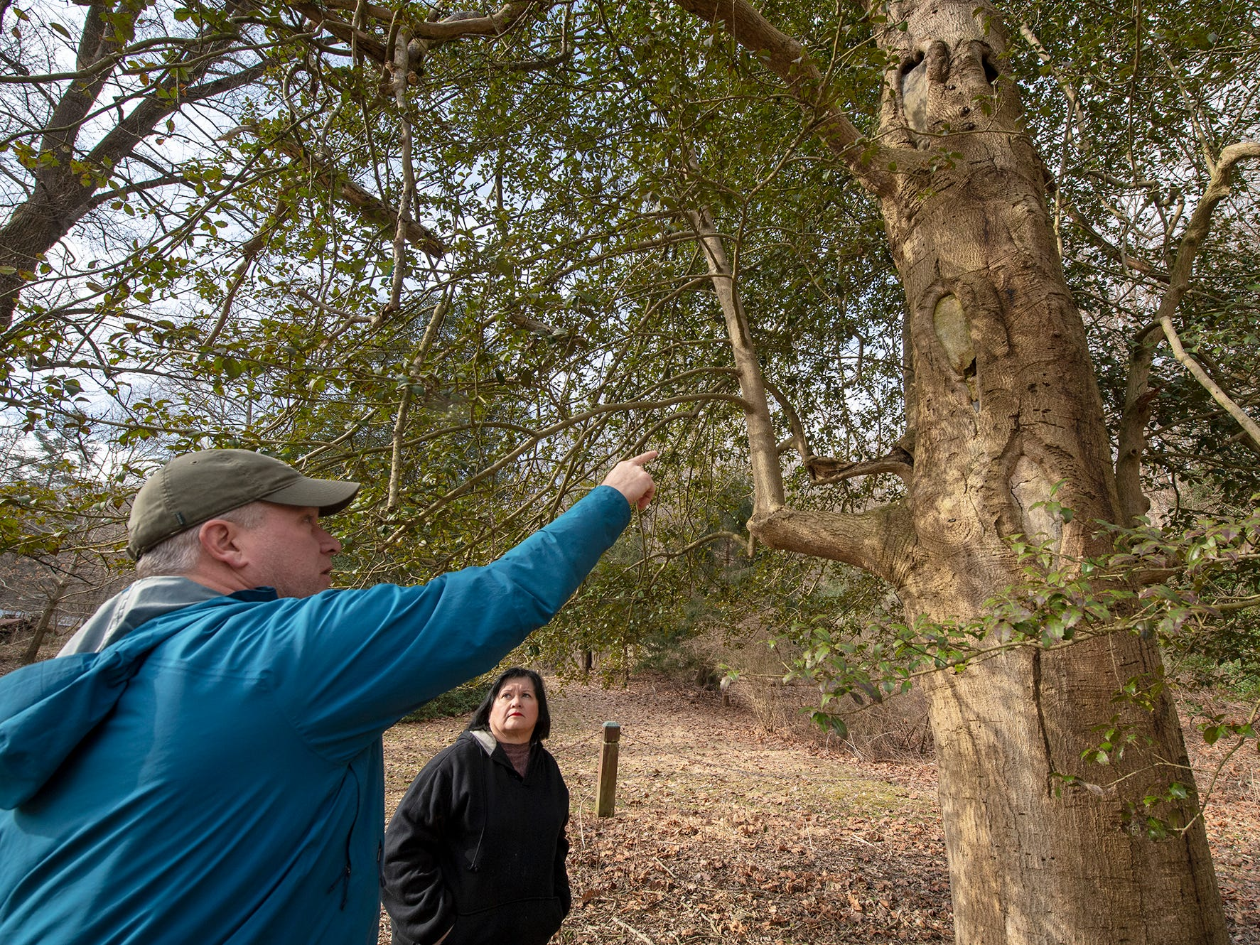 Certified arborist Scott Wade talks with Debbie Saylor, collections and research director for Indian Steps Museum about the health of the The American holly tree. The tree is believed to be 350 years old and is part of the Indian Steps Museum along the Susquehanna River in Lower Chanceford Township.