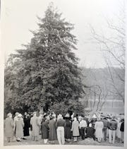 An early, undated photo of people standing around the tree. The American holly tree, believed to be 350 years old, is part of the Indian Steps Museum along the Susquehanna River in Lower Chanceford Township.