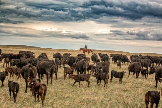 Cowboy True exhibit will feature 38 artists the Forum in Wichita Falls