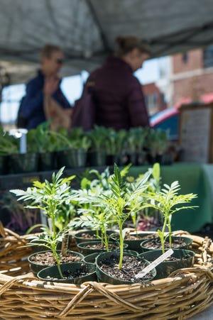 Gladheart Farms plant starts at Asheville City Market-South.